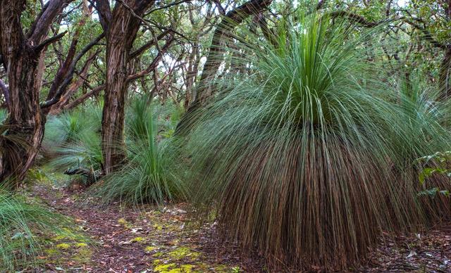 greens bush-1